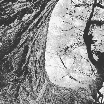 Abject a Beauty: Tree.
