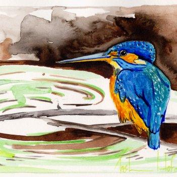 1.Small Blue Kingfisher