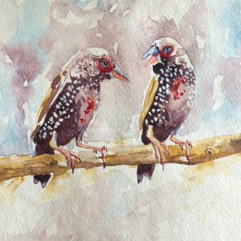 3.Painted Finches