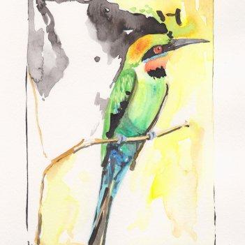 5. Rainbow Bee-Eater