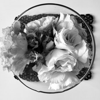 Abject Beauty: Roses.