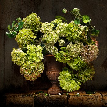 THE GREEN HYDRANGEA LIMITED EDITION 1/4