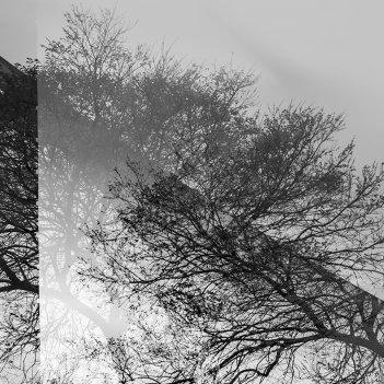 Civic tree