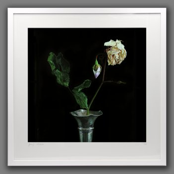 The fragile beauty of old age - framed print