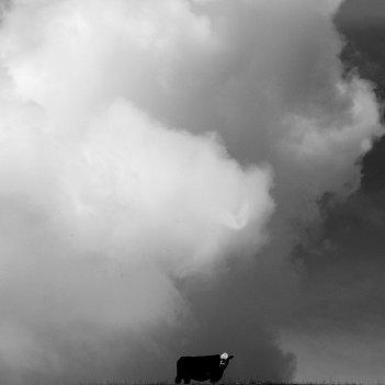 Cloud Face- Bull