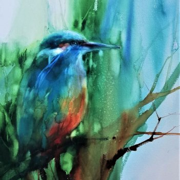 King Fisher in morning forest