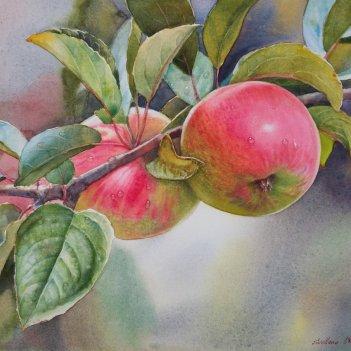 Apples Montie's Surprise